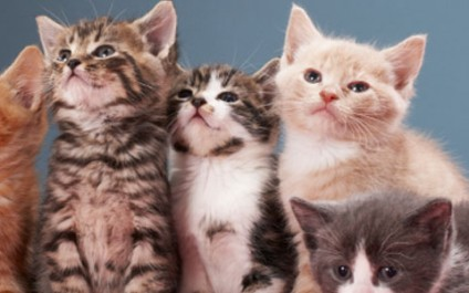 Securing social media privacy – with cats